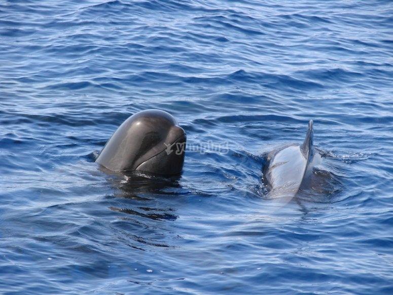 Watching cetaceans