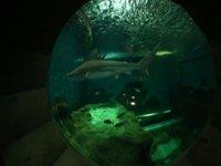 observa a los tiburones