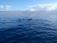 Ver cetáceos Tenerife snorkel y almuerzo 3h adulto
