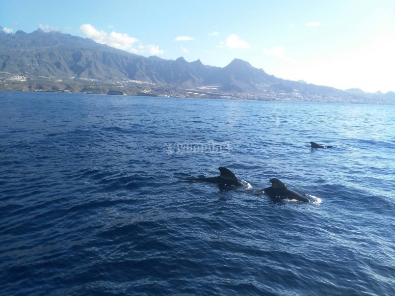 Sailing with the cetaceans
