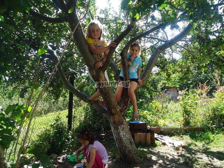 Nell'albero