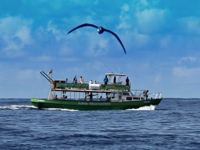 Dolphin watching boat trip in La Palma, adults fee