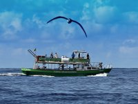 Avistar delfines La Palma visión submarina adultos