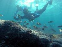 Explorando el fondo del mar
