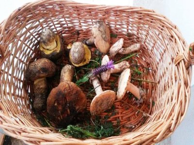 Bilingual Mushroom Workshop at Villa del Río 6h