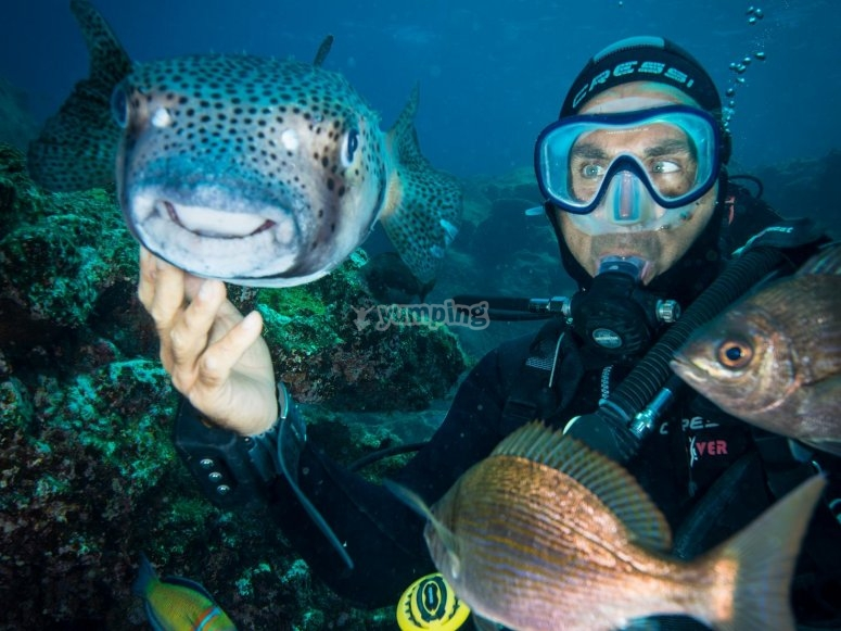 Buceador rodeado de peces