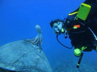 在特内里费岛潜水的急救课程
