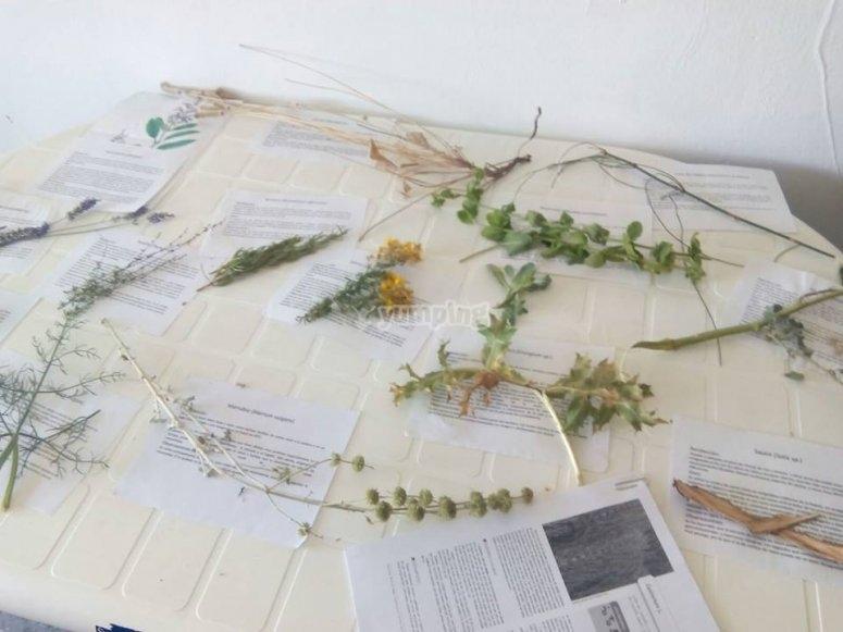 Las plantas utilizadas