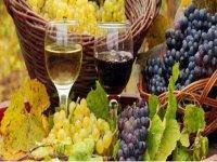 disfruta del mejor vino
