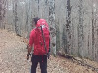 森林远足径