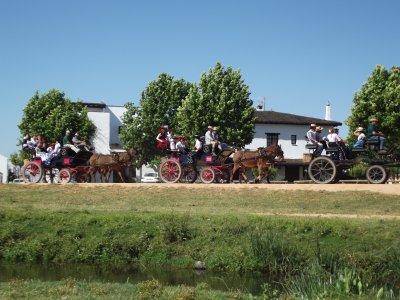 Paseo en coche de caballos en Parque de Doñana 1h