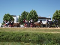Horse-drawn carriage ride in Doñana Park 1h