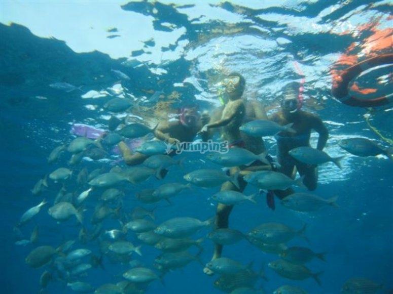 Practicar snorkel en Corralejo