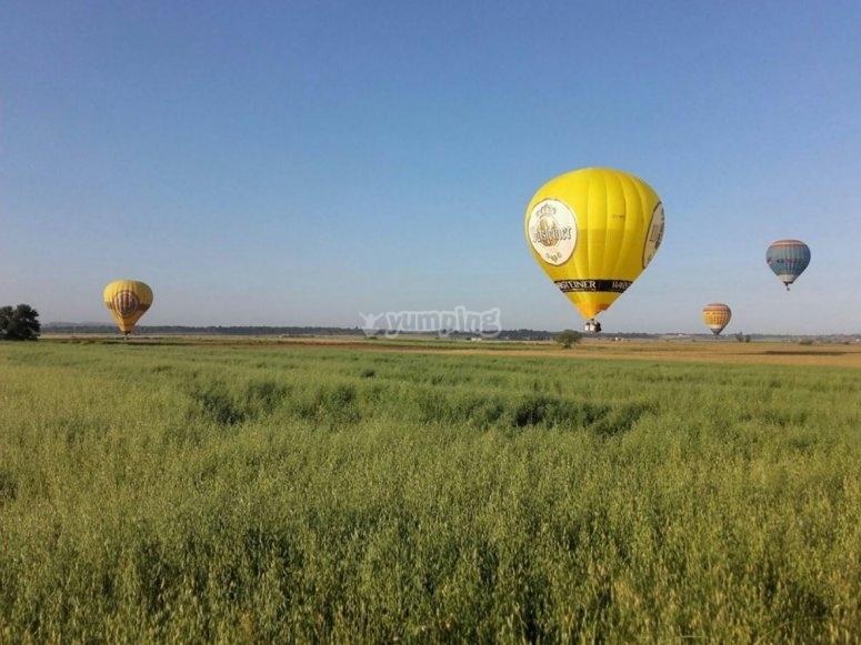 Palloncini nei campi di Maiorca