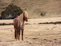 小马--999-骑马穿越风景