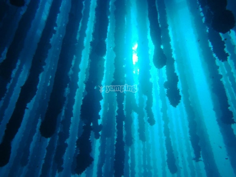 Inmersión buzos expertos en Ría de Arousa