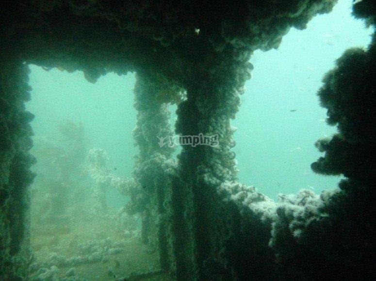 Dos inmersiones en Pecio Aries