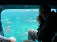 hombre observando el fondo marino desde una ventana