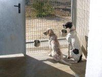 Caza con perros en Navarra