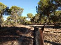 Paseo a caballo en Doñana
