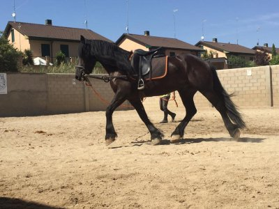 Horse-riding classes for beginners in Aranjuez