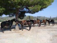 Horses under the tree on the farm