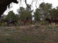 Horse riding through Vilamarxant