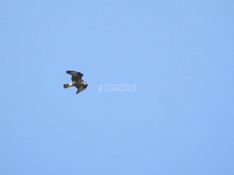 Volo di libertà