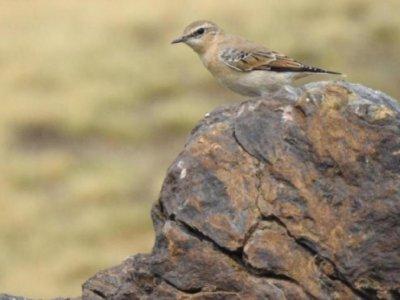 观鸟和路线在内华达山脉5h