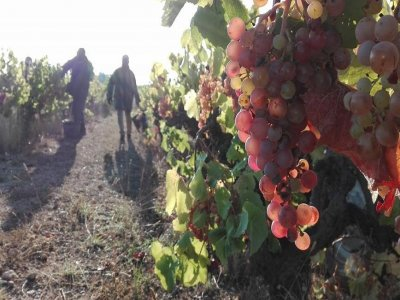 Wine tourism visit for families