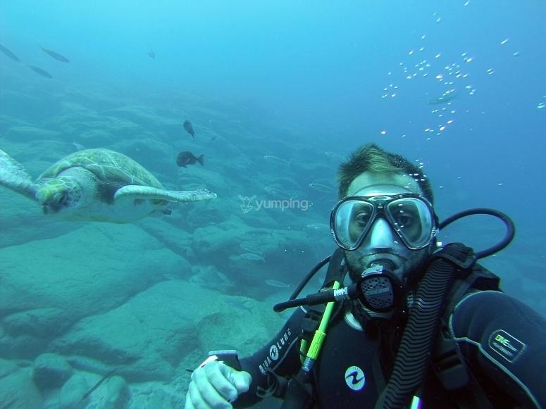 Buceador y tortugas