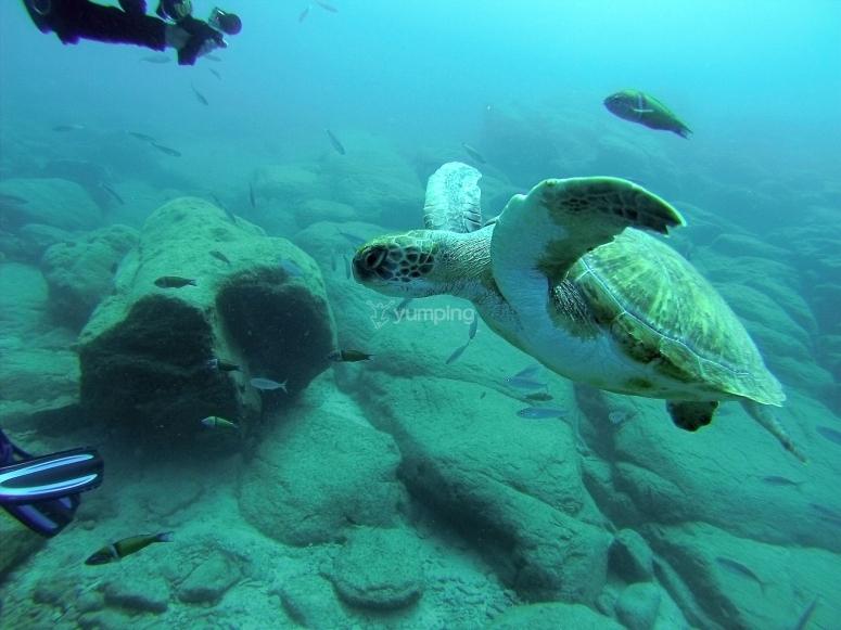 Tortugas en Tenerife
