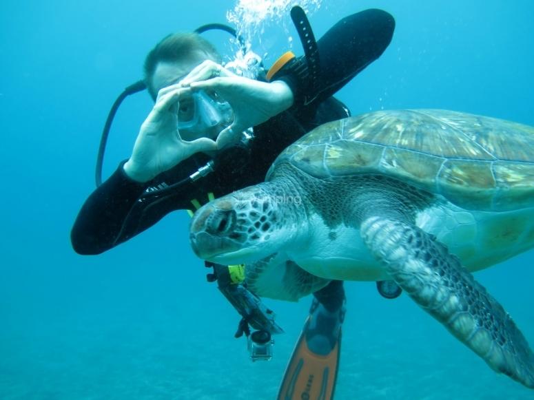 Bautismo de buceo con tortugas