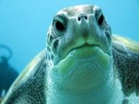 Bautismo de buceo en Tenerife con tortugas y rayas