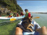 El perro disfrutando de la ruta en Kayak