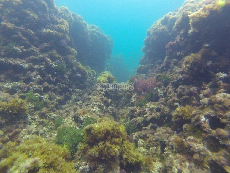 Suelo marino en la costa cántabra