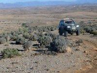 vehiculo 4x4 en un terreno con cactus