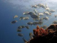 descubre a los animales marinos