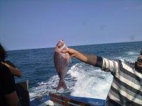 Mas pesca