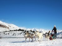 Jornada de mushing