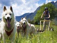 trineos de perros verano valle de tena