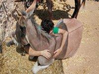burros de lo mas carinosos