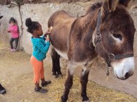 combing the donkey
