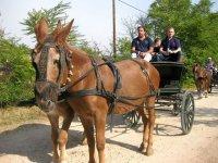 Rutas guiadas en coche de caballos