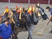El mundo del caballo y el toreo