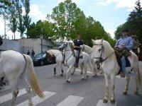 Paseos a caballo cerca de Madrid