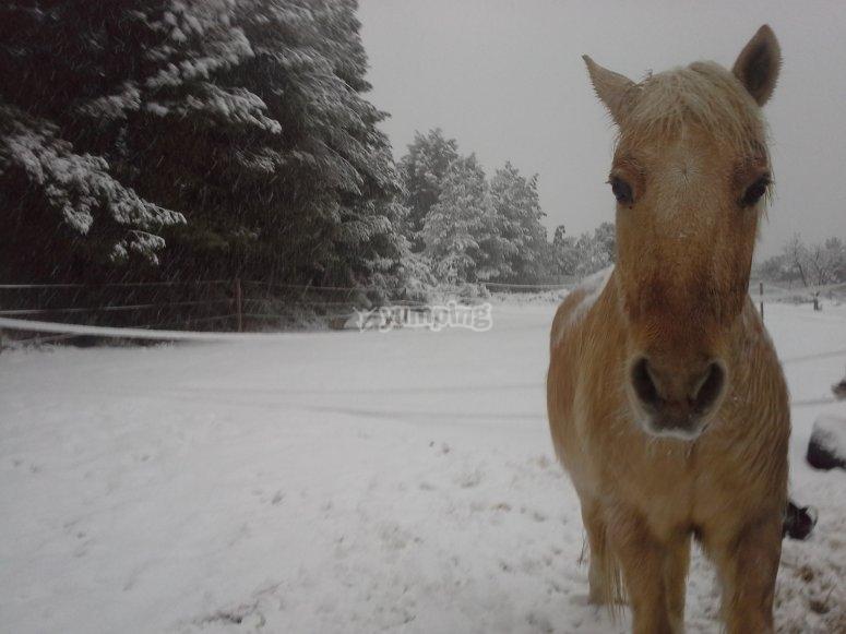 Caballo en la nieve