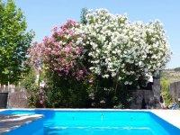 Flores sobre la piscina