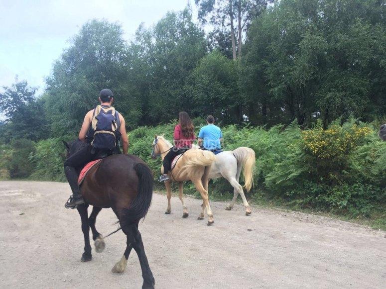 Gruppo di cavalli sulla strada