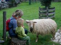 En compañía de ovejas